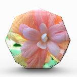 Foto hawaiana de la flor del hibisco