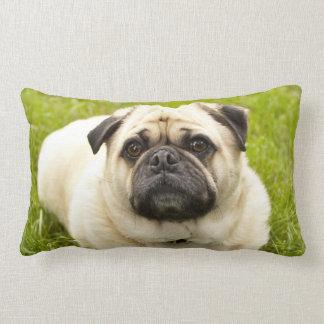 Foto hermosa de la cara divertida linda del perro cojín