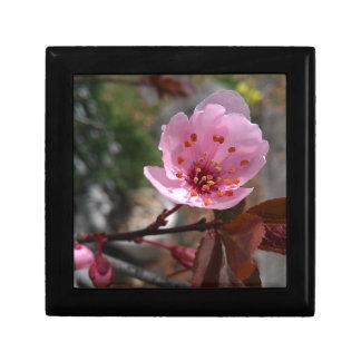 Foto hermosa de la flor de cerezo cajas de recuerdo