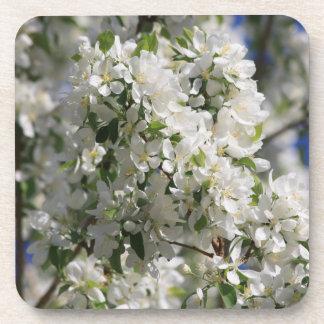 Foto hermosa de la naturaleza del flor blanco de posavasos