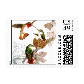 Foto hermosa de los colibríes sellos