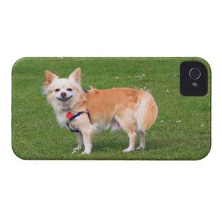 Foto hermosa de pelo largo del perro de la chihuah Case-Mate iPhone 4 fundas