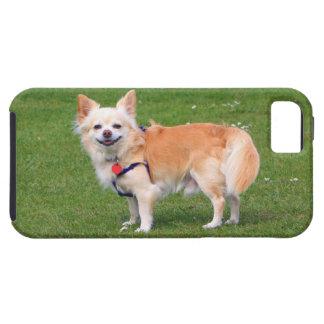 Foto hermosa de pelo largo del perro de la chihuah iPhone 5 protectores