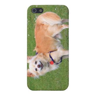 Foto hermosa de pelo largo del perro de la chihuah iPhone 5 carcasas