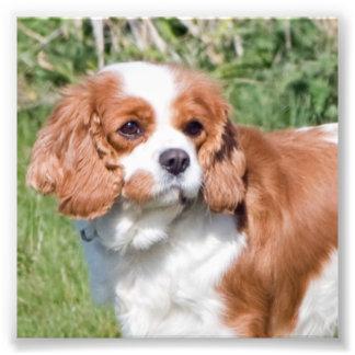 Foto hermosa de rey Charles del perro arrogante de Cojinete