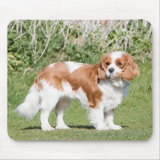 Foto hermosa de rey Charles del perro arrogante de Tapete De Ratón