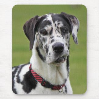 Foto hermosa del harlequin del perro de great dane tapetes de ratón