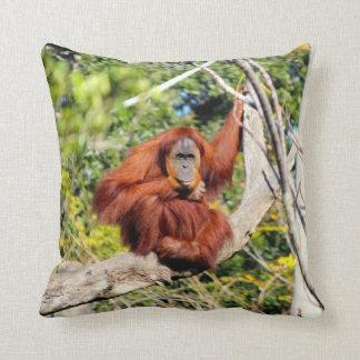 Foto hermosa del orangután cojin