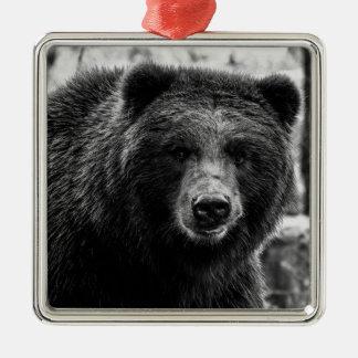 Foto hermosa del oso grizzly ornamentos para reyes magos