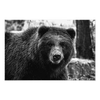 Foto hermosa del oso grizzly