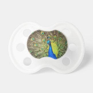 Foto hermosa del pavo real chupete de bebe
