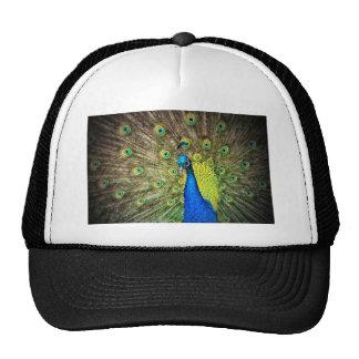 Foto hermosa del pavo real gorros