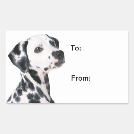 Foto hermosa del perro dálmata, a, de los pegatina