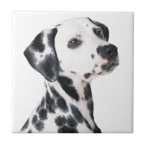 Foto hermosa del perro dálmata, regalo azulejo ceramica