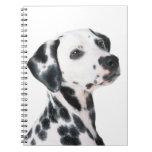 Foto hermosa del perro dálmata, regalo libretas