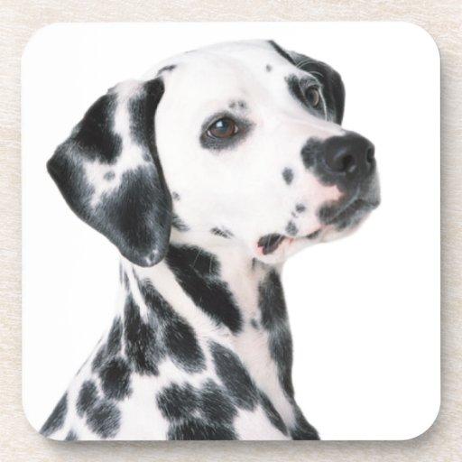Foto hermosa del perro dálmata, regalo posavaso