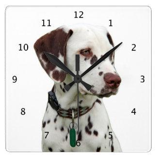 Foto hermosa del perro dálmata relojes de pared