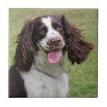 Foto hermosa del perro de aguas de saltador inglés tejas