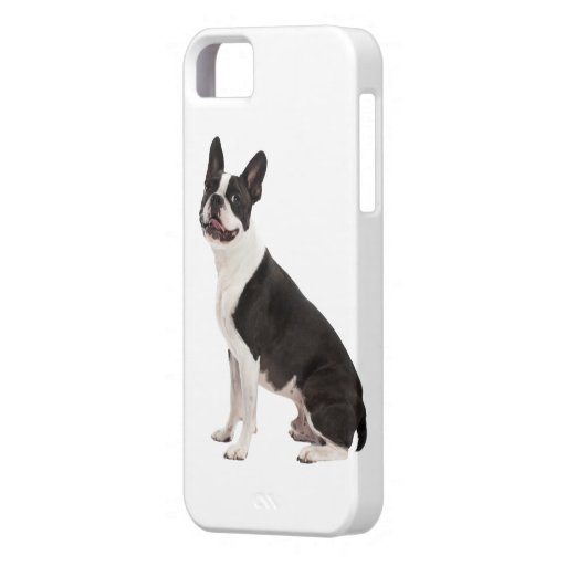 Foto hermosa del perro de Boston Terrier, regalo iPhone 5 Case-Mate Carcasas