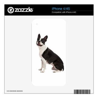 Foto hermosa del perro de Boston Terrier, regalo Skins Para eliPhone 4S