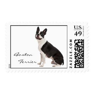 Foto hermosa del perro de Boston Terrier, sello de