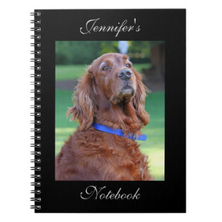 Foto hermosa del perro de Irish Setter nombre de Libros De Apuntes