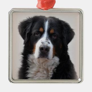 Foto hermosa del perro de montaña de Bernese, Adorno Navideño Cuadrado De Metal