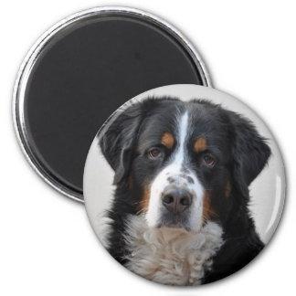 Foto hermosa del perro de montaña de Bernese, rega Imán Redondo 5 Cm