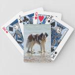 Foto hermosa del perro de St Bernard en la playa Baraja De Cartas