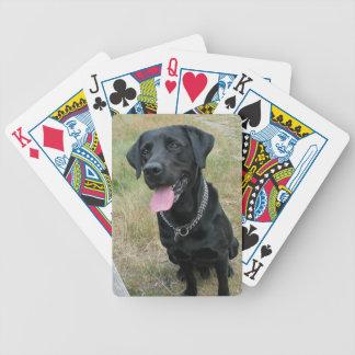 Foto hermosa del perro del labrador retriever, reg baraja