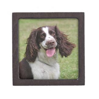 Foto hermosa del perro del perro de aguas de salta caja de joyas de calidad