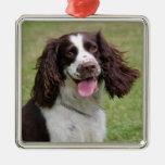 Foto hermosa del perro del perro de aguas de salta ornamentos de reyes