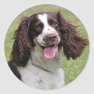 Foto hermosa del perro del perro de aguas de salta etiqueta redonda