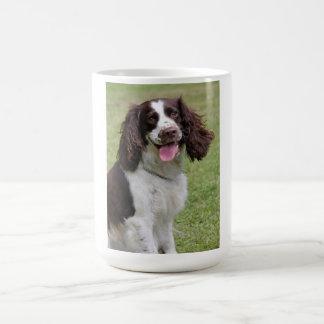 Foto hermosa del perro del perro de aguas de salta taza