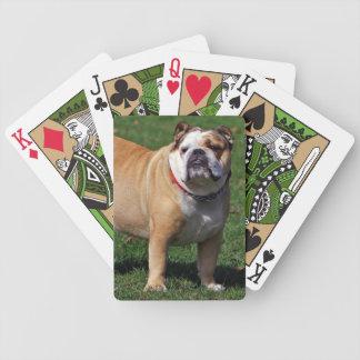 Foto hermosa del perro inglés del dogo, regalo barajas