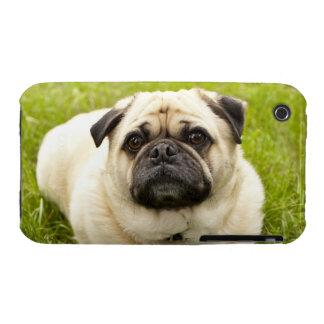 Foto hermosa del perro lindo del barro amasado, iPhone 3 protector