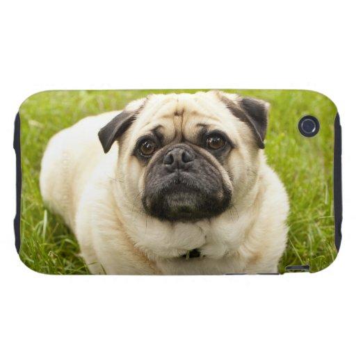 Foto hermosa del perro lindo del barro amasado, re tough iPhone 3 fundas