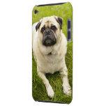 Foto hermosa del perro lindo del barro amasado, re iPod Case-Mate cárcasa