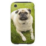 Foto hermosa del perro lindo del barro amasado, re iPhone 3 tough protector