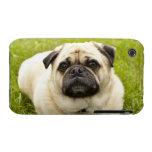 Foto hermosa del perro lindo del barro amasado, re iPhone 3 protectores