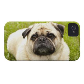 Foto hermosa del perro lindo del barro amasado, re iPhone 4 protectores