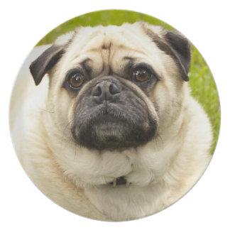 Foto hermosa del perro lindo del perro del barro a platos