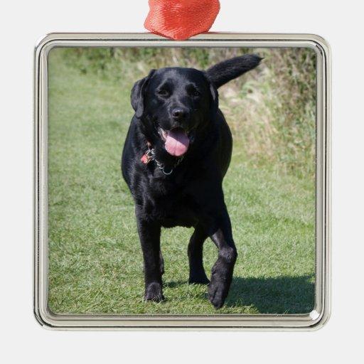 Foto hermosa del perro negro del labrador adorno cuadrado plateado