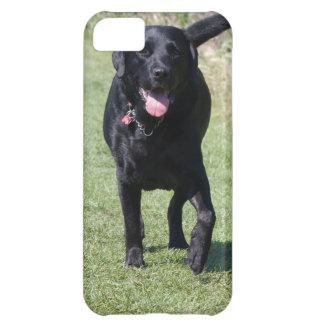 Foto hermosa del perro negro del labrador retrieve