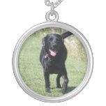 Foto hermosa del perro negro del labrador retrieve pendientes