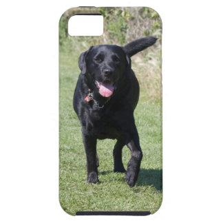 Foto hermosa del perro negro del labrador retrieve iPhone 5 coberturas