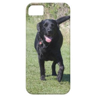 Foto hermosa del perro negro del labrador retrieve iPhone 5 carcasas