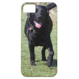 Foto hermosa del perro negro del labrador retrieve iPhone 5 protector