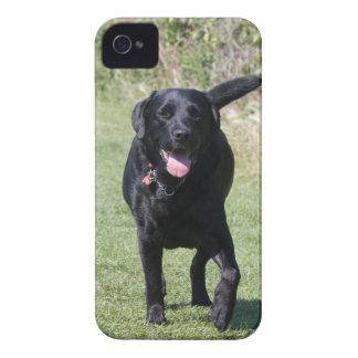 Foto hermosa del perro negro del labrador retrieve Case-Mate iPhone 4 funda