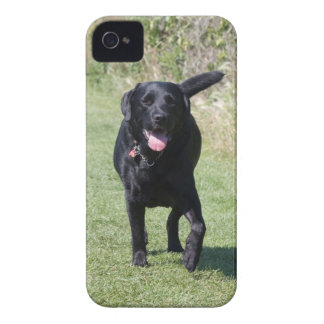 Foto hermosa del perro negro del labrador retrieve iPhone 4 cobertura